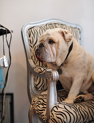 dylan walker hair school graduate salon dog