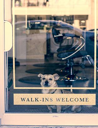 eliza trendiak salon owner artel shop dog